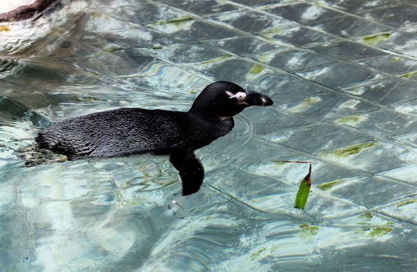 幸福的小企鹅.jpg