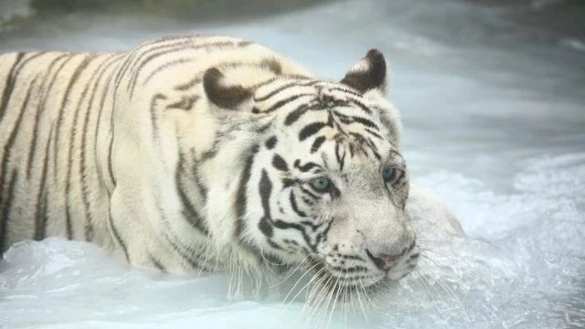 动物园的动物居然不怕热?都是因为这个秘密神器!